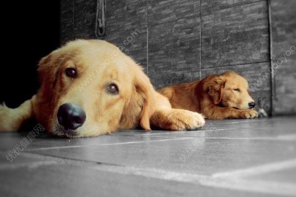 禽类也可感染狂犬病,专家:加快犬只管理立法[多图]